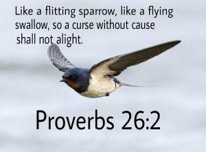 fleeting sparrow