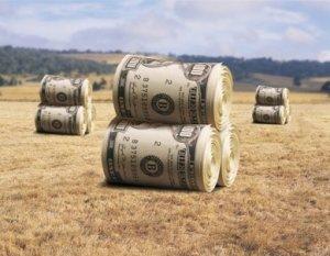 rich farmers