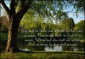Psalm 1.3