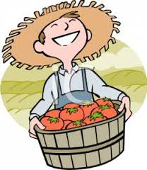 tomatoe farmer