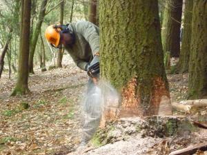 cut off tree
