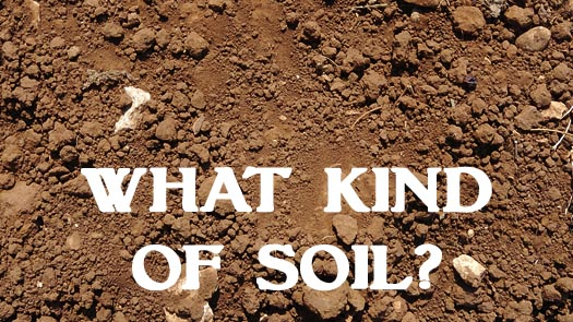Parable of the Soil