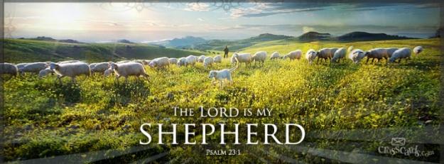 my-shepherd