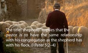 pastor-shepherd